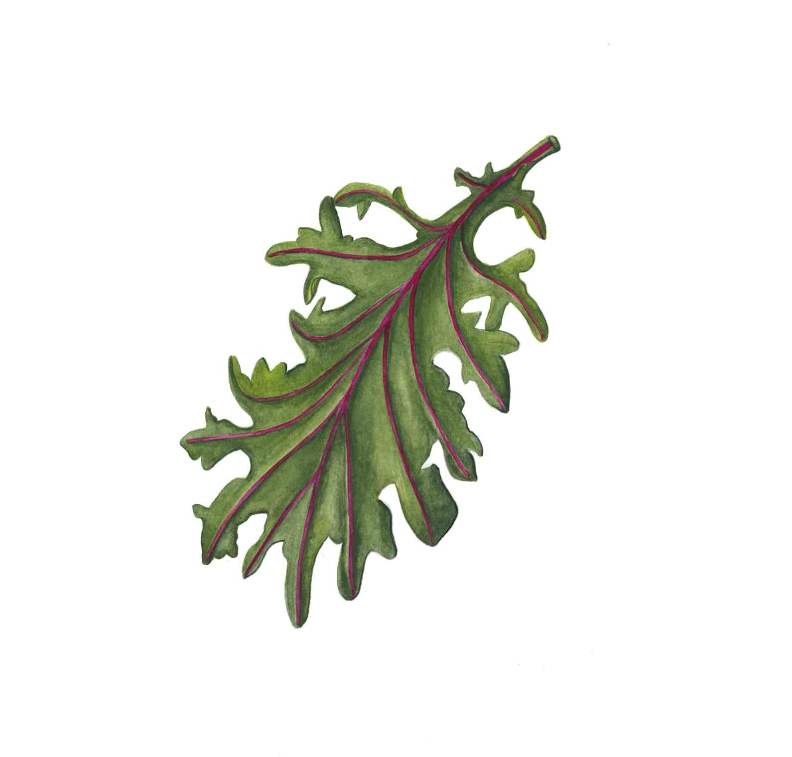 caras-garden-kale