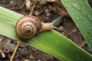 slow down snail